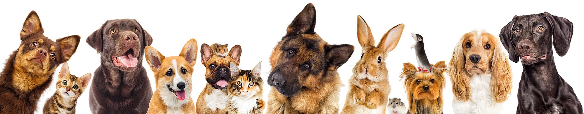 Distribution d'alimentation  pour animaux